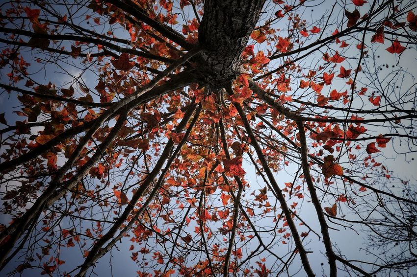 Tree Nature Low Angle View Branch Growth Beauty In Nature No People Day Outdoors Sky Close-up Colors EyeEm Best Shots - Nature Landscape Building Exterior Light And Shadows Tree Beautiful People And Places Urban Landscape Red