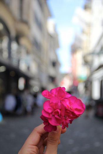 Daytime Flower Beautiful Pink Flower Streetphoto