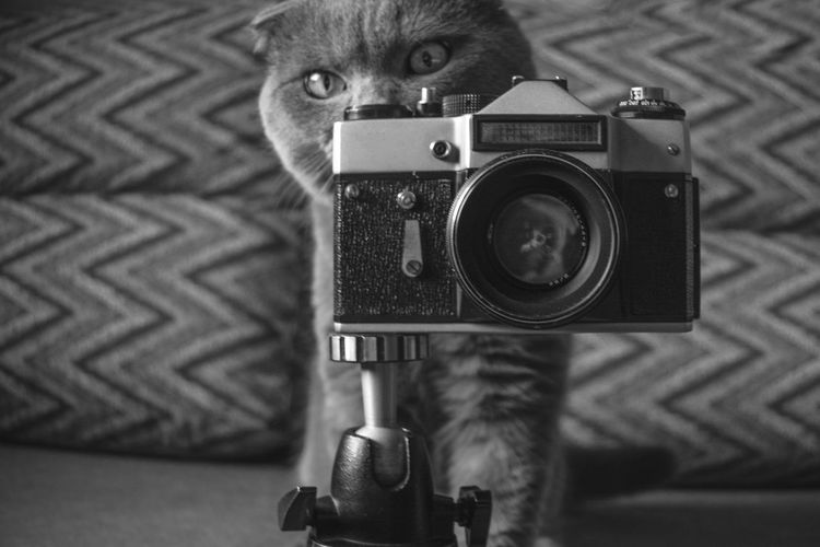 Photography Themes Camera - Photographic Equipment Technology Photographing Lens - Optical Instrument Photographic Equipment Indoors  Retro Styled Focus On Foreground Portrait Close-up Front View Camera Activity Lens - Eye No People Looking At Camera Selective Focus Cat Domestic Animals Scotishfold View Digital Camera Kitten Cat Photography