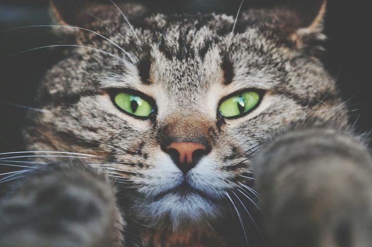 Cat♡ Cat Lovers