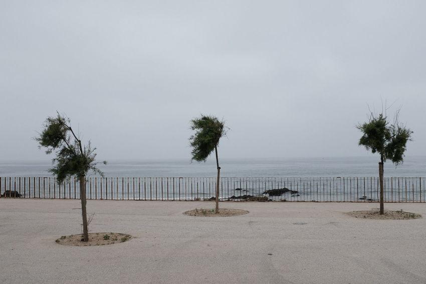 Foggy... Threeweeksgalicia Sea Seascape Palm Palm Trees Seascape Portugal Rocky Coastline Coastline Coastal Feature Tranquil Scene Horizon Over Water Surf Ocean Coast Shore