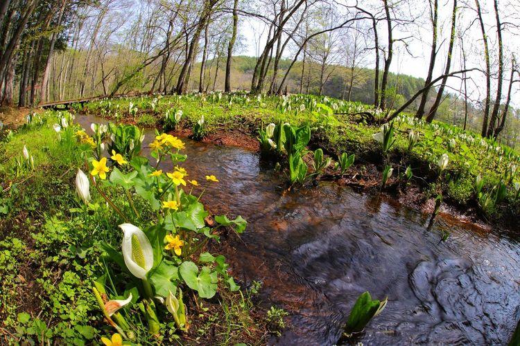 戸隠の水芭蕉~📷って出掛けたら、 手前の飯綱高原で見つけて 満足した日😆 一目惚れんず Tree Water Grass Sky Plant Green Color