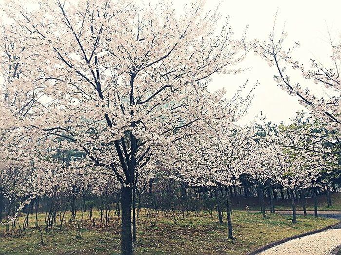 봄이오나봄
