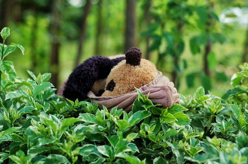Nature Environment Leaf Wilderness Grass Plant Beauty In Nature Tree No People Landscape Outdoors Day Freshness Mammal Toy Stuffed Animal