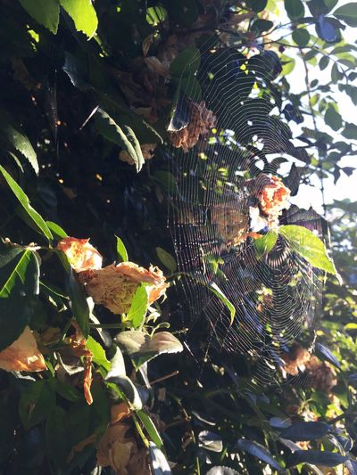 Spider web Diary Photo Enjoying Life