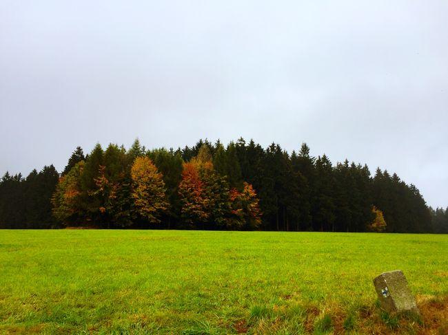 Herbststimmung. Nature Natural Beauty Natural Fall Trees Forest Fichtelgebirge
