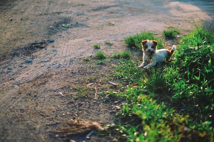 Dog Dog Love Dog❤ Cute Cute♡ Cute Dog