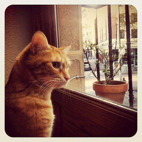 Watching #cat #catslooking #catslookingoutside #catstagram #gato #camaron #ventana #outside #fuera #balcon #balcony #mirando #igscout #_wg #instapic #instagramer #insta_crew #instamillion #tagstagramers #instago #instagroove #igersmadrid #picoftheday #ins Mirando Catslooking Insta_crew Catslookingoutside Cat Igscout Earlybirdlove Outside Instagramer _wg Gato Instagroove Balcony Instapic Iphonesia Instamillion Picoftheday Tagstagramers Catstagram Insta_ñ Balcon Ventana Instamood Earlybirdonly Igersmadrid Fuera Instago Camaron