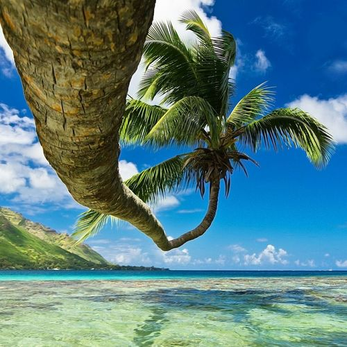 Tahiti Photography Check This Out Relaxing Enjoying Life Snorkeling Island