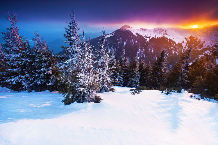 Winter landscapes in a perfect light from Ciucas Mountains, Romania. Beautiful Fairytale  Ice Light Nature Sunlight Travel Winter Background Blue Clouds Cold Colorful Forest Landscape Mountain No People Outdoor Pine Tree Sky Snow Sunset Tranquil Scene Vacation White