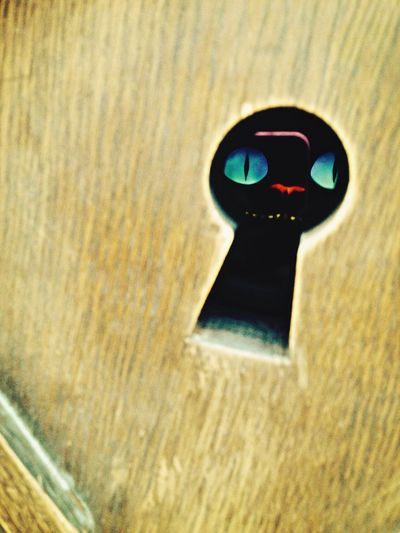 Alice In Wonderland Crazy Key Cat