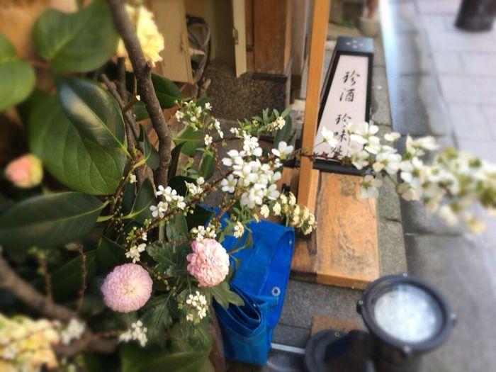 Kyoto Matiya Kyoto Tradisional Street Kyoto Street Kyoto,japan Kyoto Labyrinth Labyrinth Matiya Florists' Daisy Japanese Chrysanthemum Chrysanthemum Kyoto Street Flower
