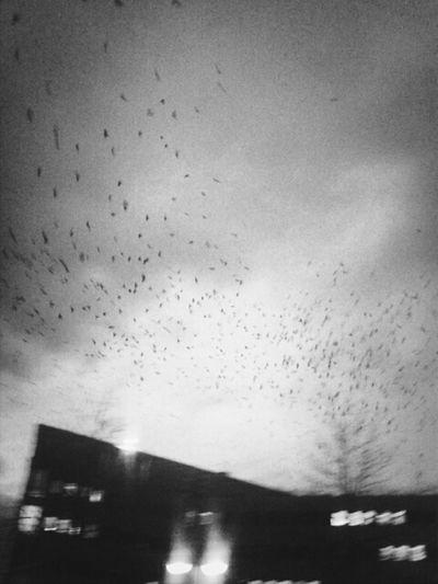 Streetphotography Birdwatching Birds Karlsruhe Streetphoto_bw