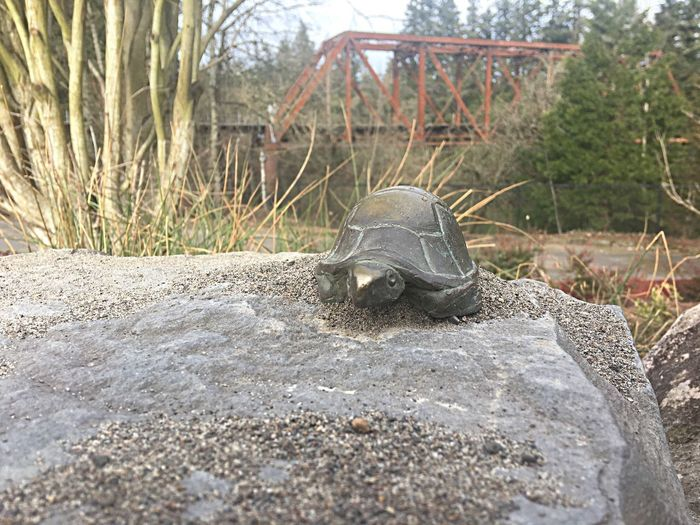 Little Turtle Statue in Tualatin Community Park next to the Beautiful Tualatin River - Animal Themes Tortoise Shell Tortoise Day No People Outdoors Animal Statue Reptile Nature Close-up