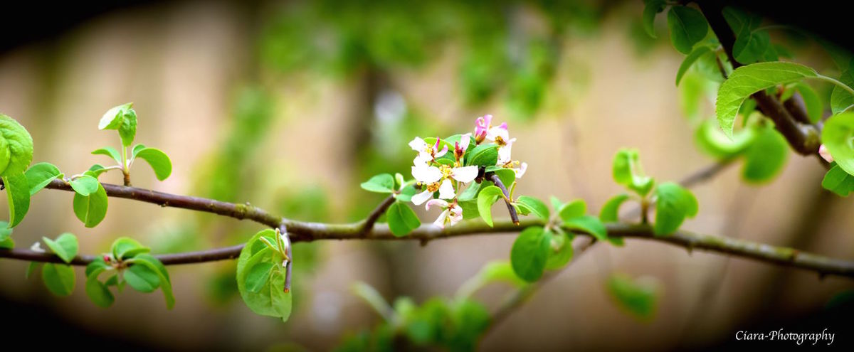 Beauty In Nature Beginnings Close-up Flower Green Color Growing Growth Nature New Life Outdoors Plant