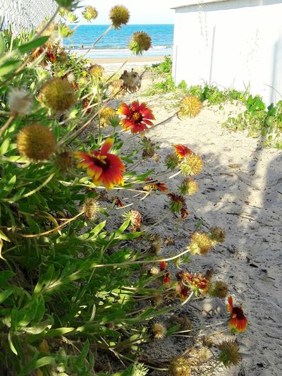 High angle view of flowers on beach against sky