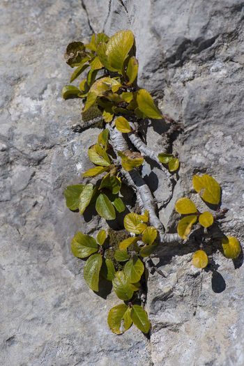 Beauty In Nature Close-up Day Flower Fragility Freshness Growth Leaf Nature No People Outdoors Pilatus Plant Plant Growing On The Stone