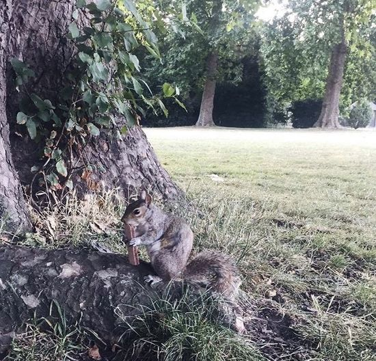 View of cat sitting on tree trunk in field