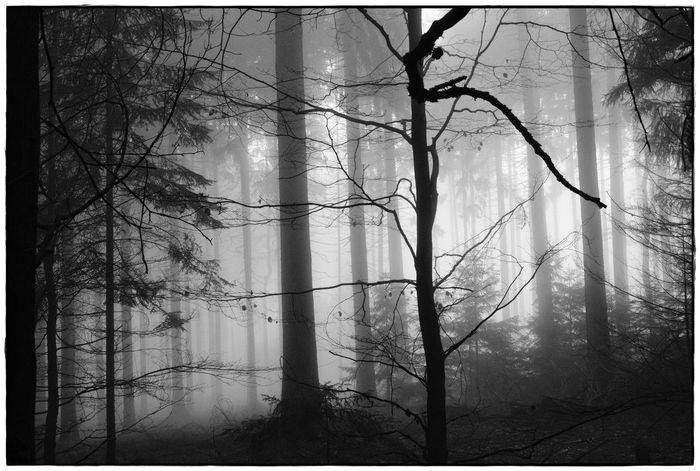 foggy forrest IV Bare Tree Bw Day Fog Forest Landscape Lawoe Mist Nature No People Outdoors Tranquility Tree