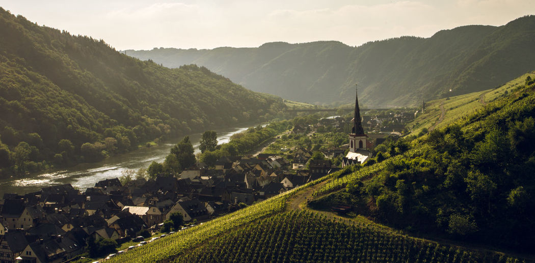 Wineyards in sunset panorama - Moselsteig near Senheim Mosel Nature Panorama Beauty In Nature Built Structure Day Environment Germany Green Color Land Landscape Moselsteig Mountain Mountain Range Mountains Nature No People Outdoors Plant Sky Sunset Tranquility Tree Water Wineyard