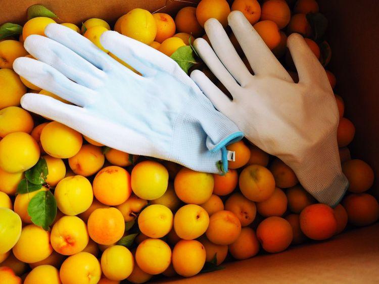 Japanese apricot Food And Drink Japanese Apricot Food Healthy Eating Freshness Hearvest Yamanashi,japan Yamanashi