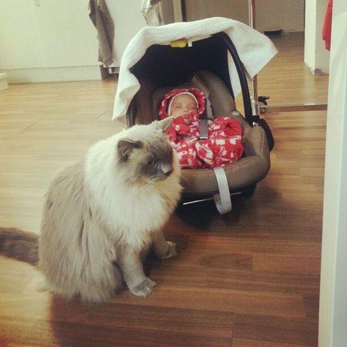 Kontor Pishi Kompis Besok Vaktar Hans Favoriter Cat Bebis Love Kärlek Dbrand Finaste Fika Mysigt