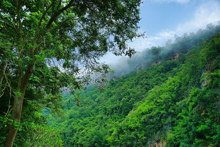 EyeEmNewHere Freshness Holiday Vacations Beauty In Nature Day Fog Forest Green Color Growth Landscape Lush Foliage Mitz Mountain Nature No People Outdoors Scenics Sky Tranquil Scene Tranquility Tree