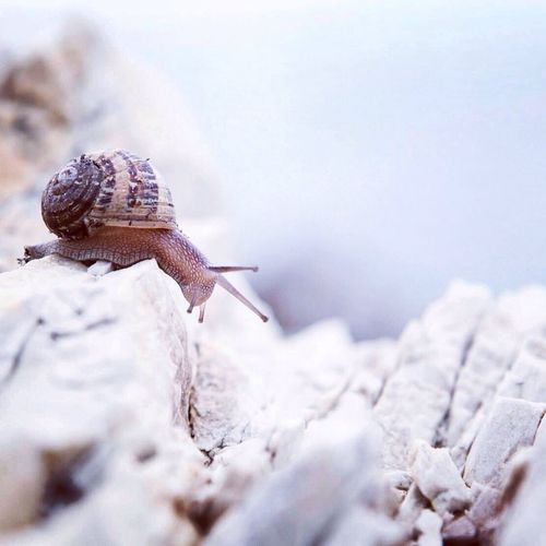 Close-up of snail on rocks