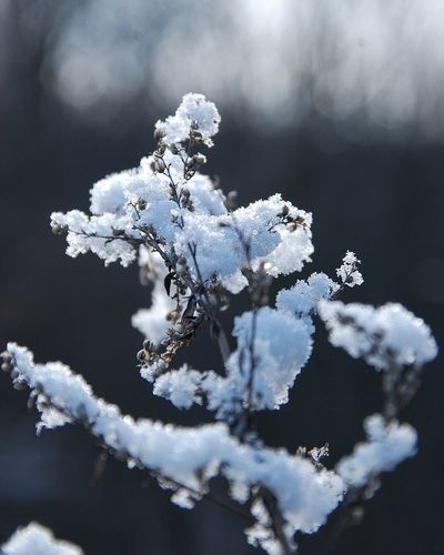 Close-Up Of Snow Covered Tree Against Sky