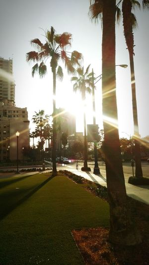 Sun Sunset_collection Sunset Silhouettes Sunrays Palmtrees & Concrete Palm Trees Downtown Long Beach  Downtown Living Street Photography Street Scene Bestoftheday EyeEm Best Shots Taking Photos City Life Long Beach California Beautiful Day