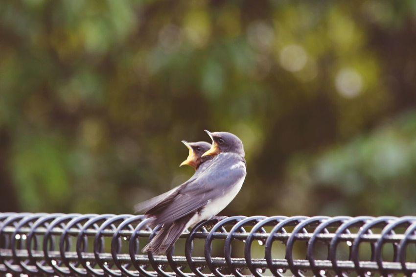EyeEm Best Shots - Nature EyeEm Nature Lover Nature EyeEm Best Edits Bird