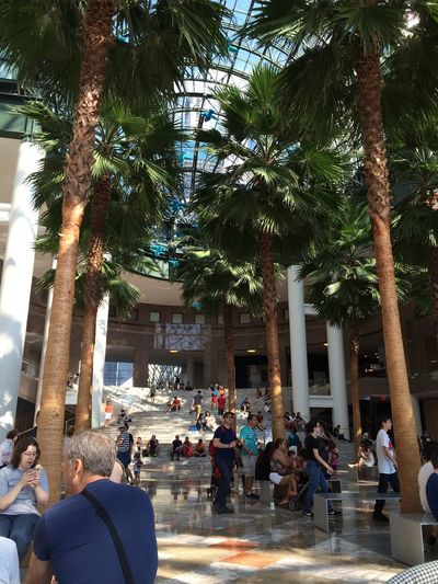 NYC Le District Crowd Palm Trees People People Together