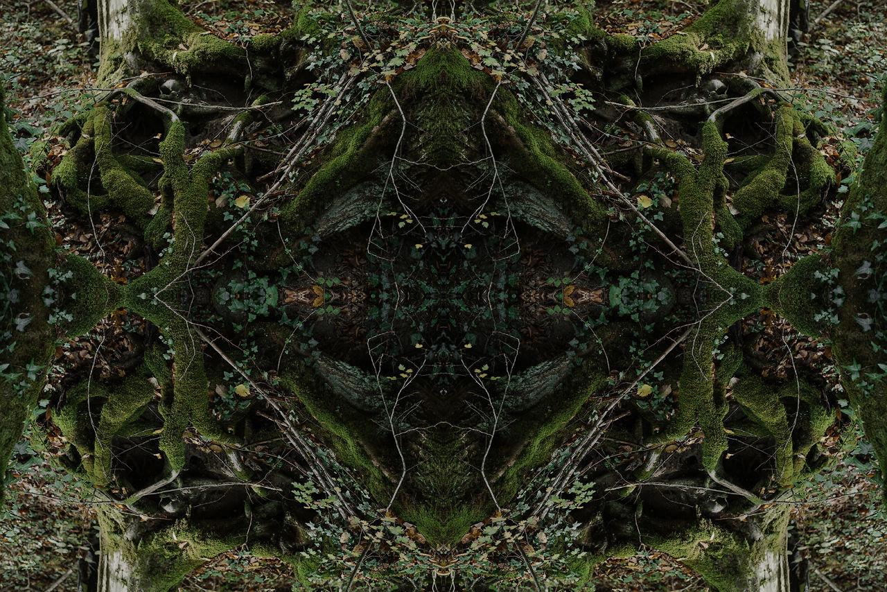 DIGITAL COMPOSITE IMAGE OF PLANTS