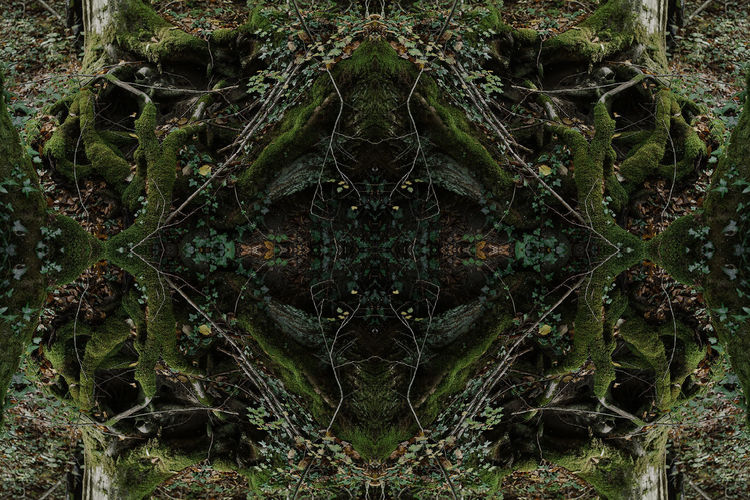 Full frame shot of plants in forest