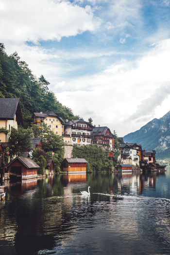 Scenic view over a swan swiming in the Hallstater See Architecture Built Structure Building Exterior Cloud - Sky Water Building Sky Waterfront House Mountain City Residential District Nature Town Day Transportation No People Reflection River Outdoors Hallstatt Salzkammergut Village Swan Reflection