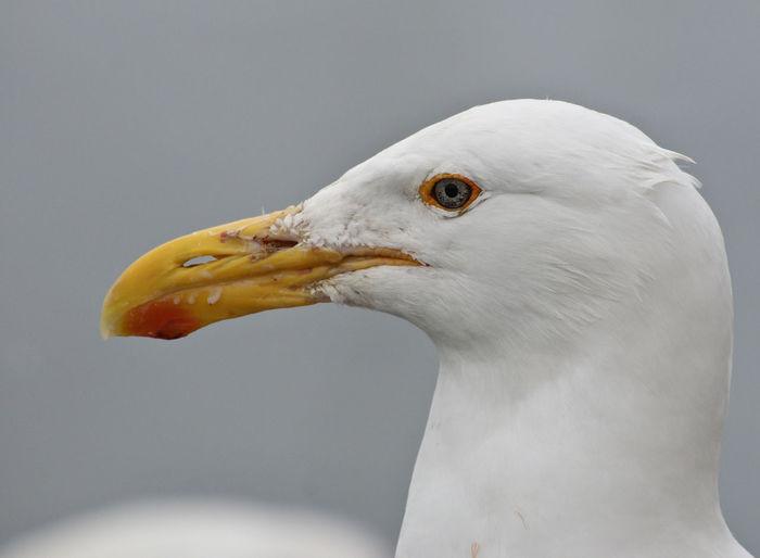 Close-up of white birds