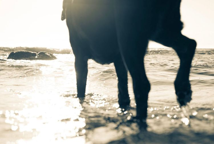 Low section of horse walking on beach