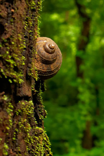 Snail in rain forest Snail Rain Forest Rain Forest Plants Rain Forest Tree Rain Forest Trees Snail On Tree She'll On Tree Animal Themes Green Color Plant Life