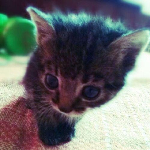 Cat Kaķis Cute Followingmy follfowbackzaļš