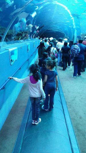 Aquarium Learn & Shoot: Leading Lines Atlanta Ga Shark Tank