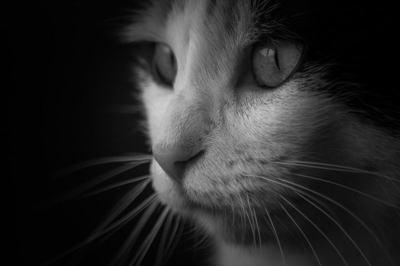Close-up portrait of cat with eyes closed