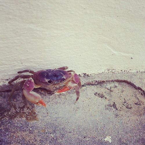 Obsessed with the crabs here Crab Nature Wildlife Cute