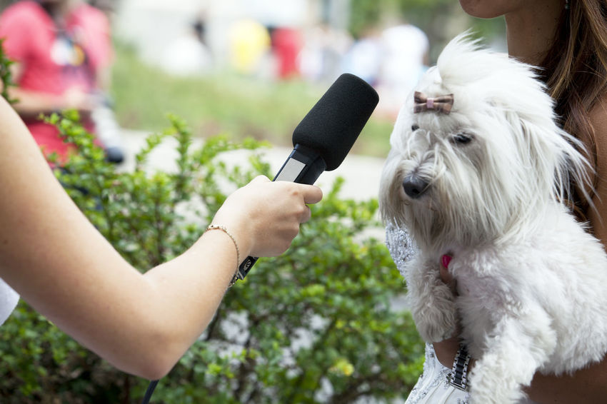 Media interview with a young girl holding a pet dog Discussion Interview Mic Press Reporting Standing Canine Care Comment Conversation Dog Domestic Domestic Animals Interviewing Journalism Media Microphone One Animal Pet Owner Pets Public Opinion Real People Report Reportage Surveying