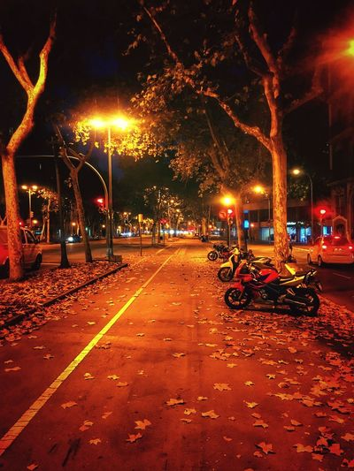 Post Lamp Night Streets Of Barcelona Barcelona♡♥♡♥♡ Bicycle Illuminated Night Transportation City Street Mode Of Transportation Glowing Street Light Built Structure Building Exterior Outdoors Motor Vehicle Land Vehicle Nature Lighting Equipment Architecture Car No People Tree Road