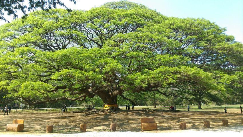 Summer Exploratorium Tree Branch Sky Green Color