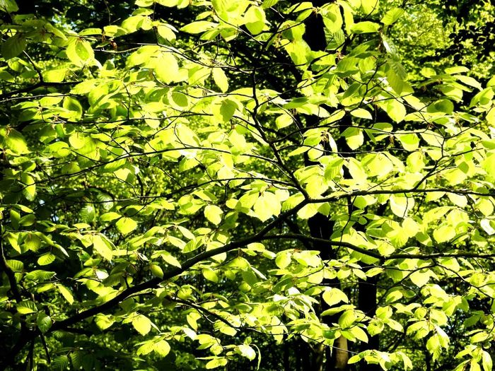 Green Leaves Healthy Harmony Adventure Nature Sunny Sunshine Forest Day No People