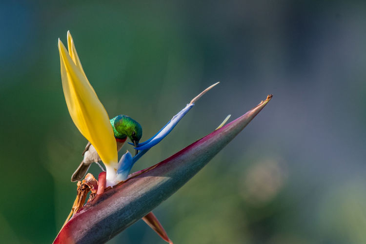 Close-up of parrot perching on plant