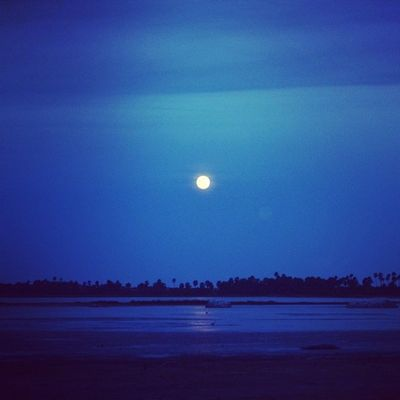Moonlit night Nature Yala EarthInstagram Srilanka_travel srilankatailormade srilanka nature iamsrilanka yala