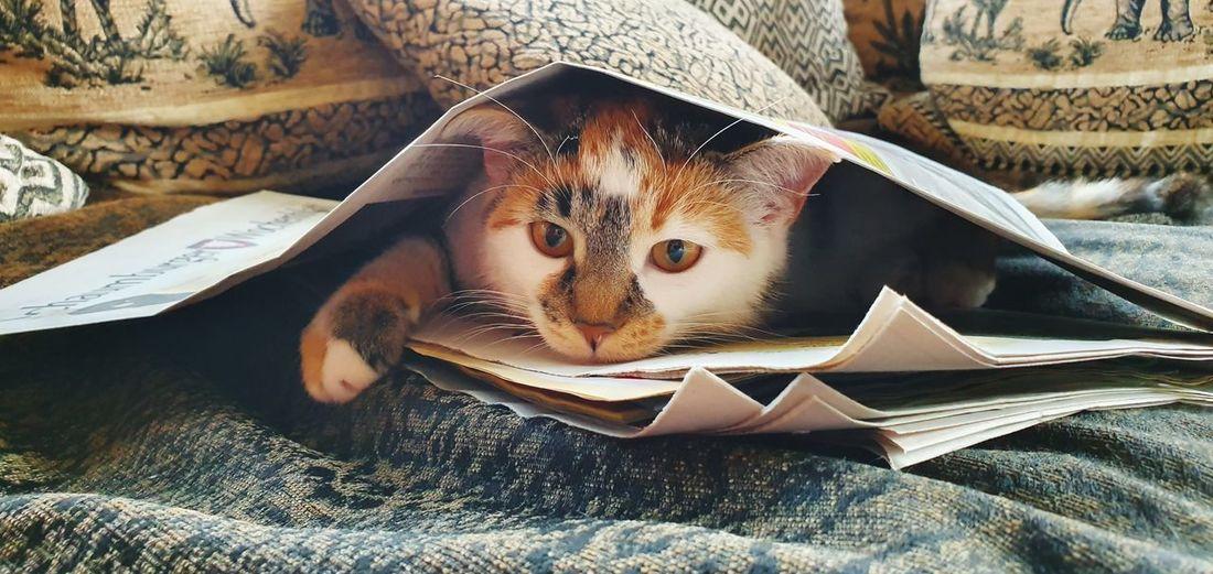 Katze Hide And