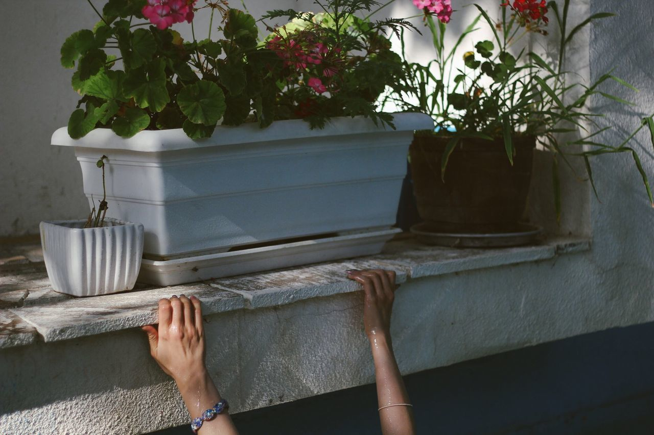 Cropped Hands By Potted Plant
